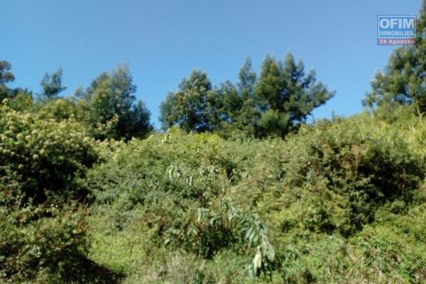 terrain constructible de 5771 m² au Cap Camélia.