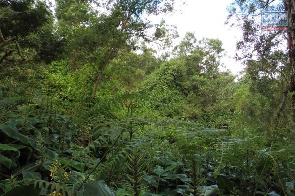 Terrain agricole de 1280 m2 au Cap Camélia