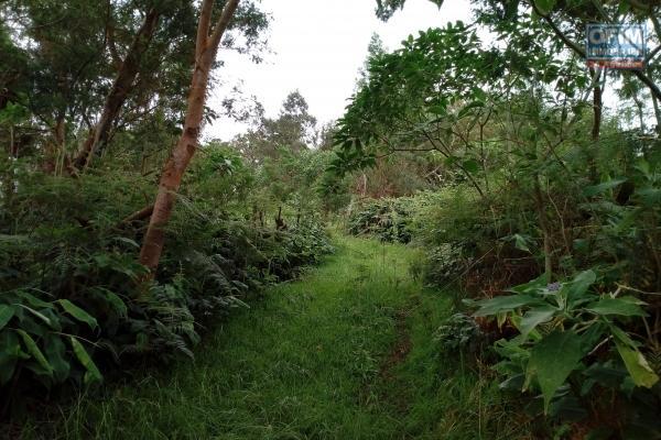 Terrain agricole de 900 m2 au Cap Camélia