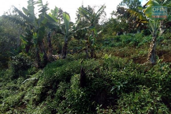 Terrain constructible de 888 m² au Cap Camélia