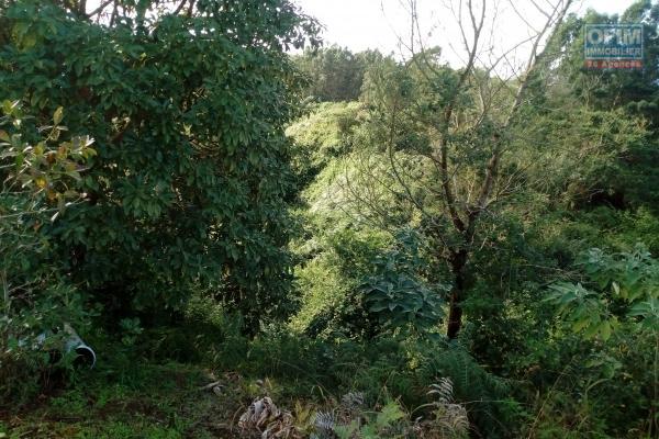 Terrain agricole de 17523 m²  dans les hauts du Cap Camélia.